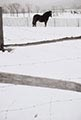 Saul Leiter Color Photograph, Horse in Snow